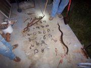 Lake MartinRockford Snakes 3